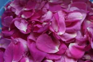 Närbild på rosenblad. Close-up on rose petals. Lähikuva ruusun terälehdistä.