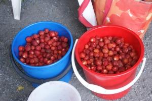 Två hinkar med jordgubbar. Two buckets of strawberries. Kaksi ämpäriä mansikoita.