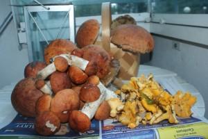 Svamp, mushrooms, sieniä