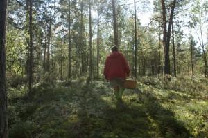 I skogen, in the forest, metsässä