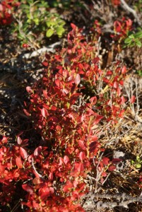 Höstfärger, colours of autumn, syysvärejä