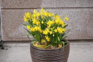 Vårtecken, signs of spring, kevään merkkejä