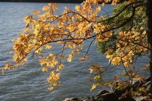 Höstfärger, autumn colours, syysvärit