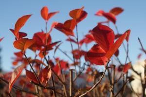 Höst, autumn, syksy
