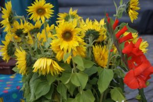 Höstblommor, autumn flowers, syyskukkia