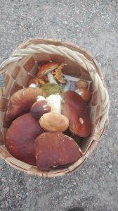 Karljohansvamp, porcini mushrooms, herkkutatteja