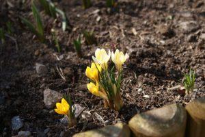 Vår, spring, kevät